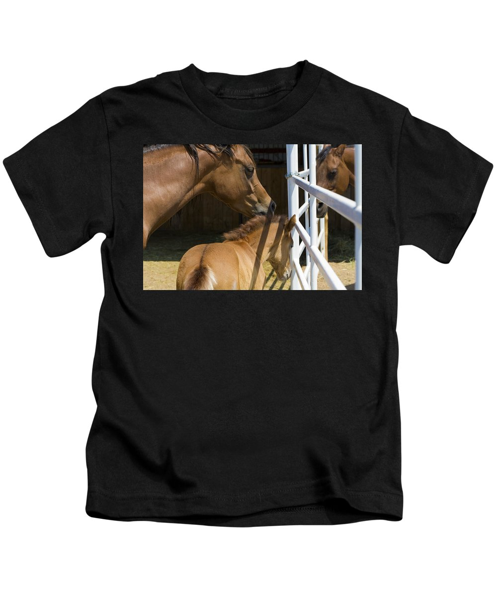 Mother Kids T-Shirt featuring the photograph Socializing Amongst Horses by Marilyn Hunt