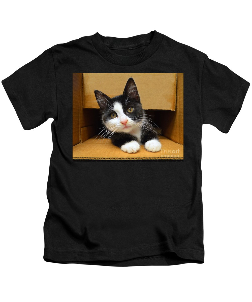 Tuxedo Kids T-Shirt featuring the photograph Special Delivery Tuxedo Kitten by Catherine Sherman