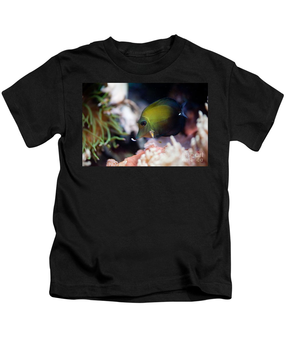 Zoo Kids T-Shirt featuring the photograph Spotted Aquarium One Fish by Arletta Cwalina