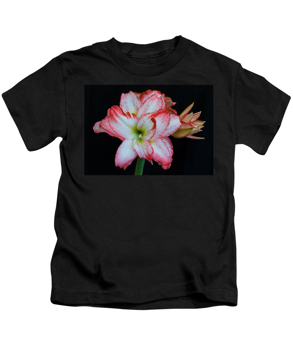 Amaryllis; Flower; Bloom; Blossom; Springtime; Spring; March; Stem. Bulb; Plant; Wildflower; Black; Kids T-Shirt featuring the photograph Springtime Florida Amaryllis by Allan Hughes