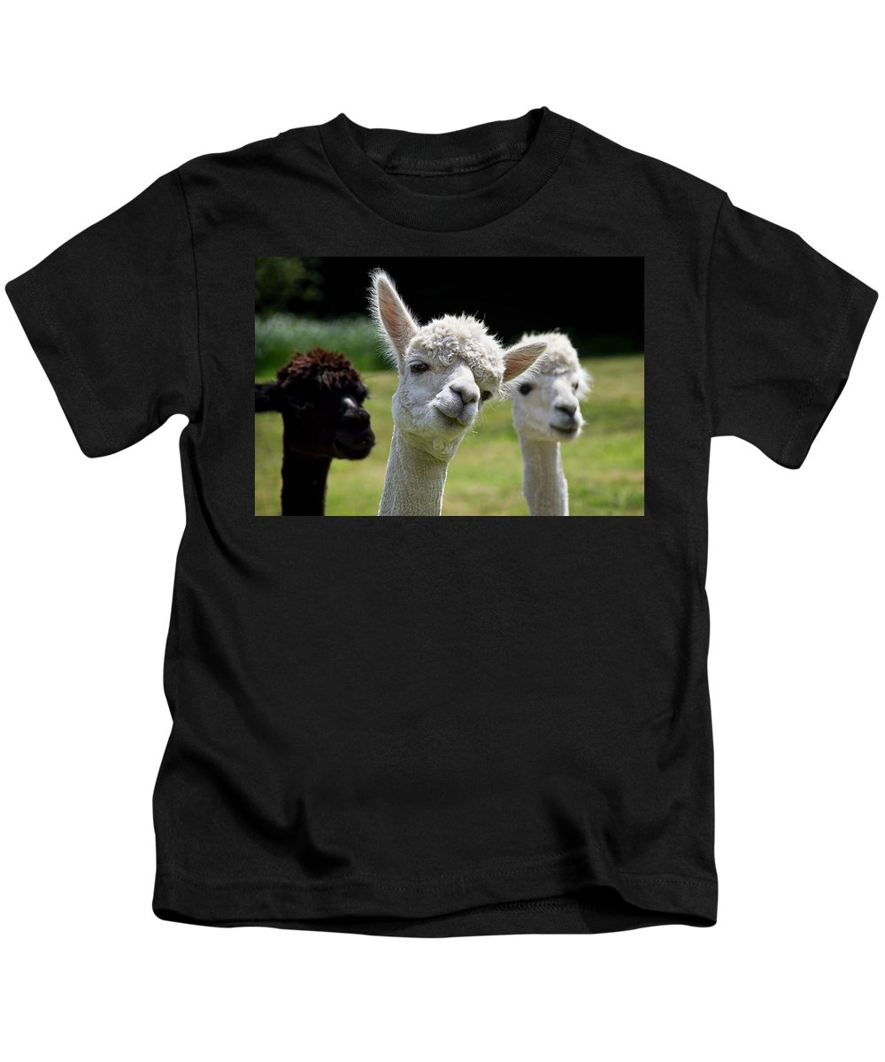 Alpaca Kids T-Shirt featuring the photograph Stealing The Limelight by Susie Peek
