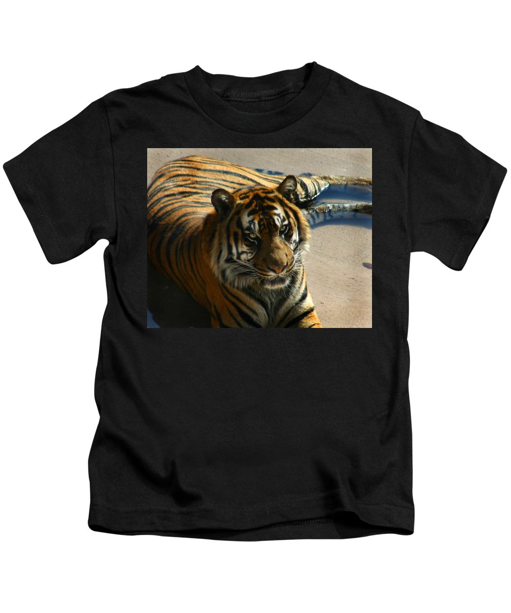Tiger Kids T-Shirt featuring the photograph Sumatran Tiger by Anthony Jones