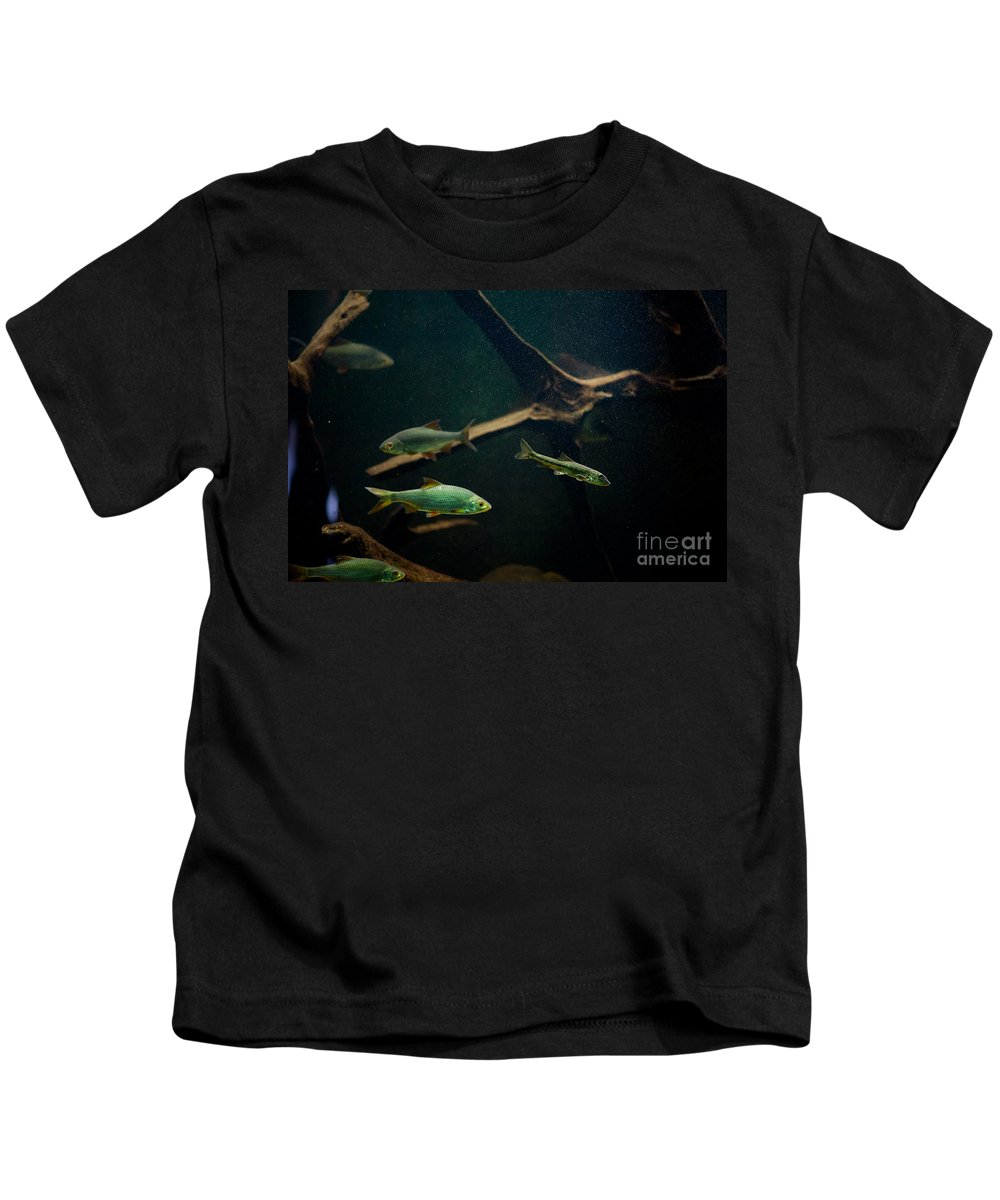 Zoo Kids T-Shirt featuring the photograph Sunless Aquarium Fish Group by Arletta Cwalina