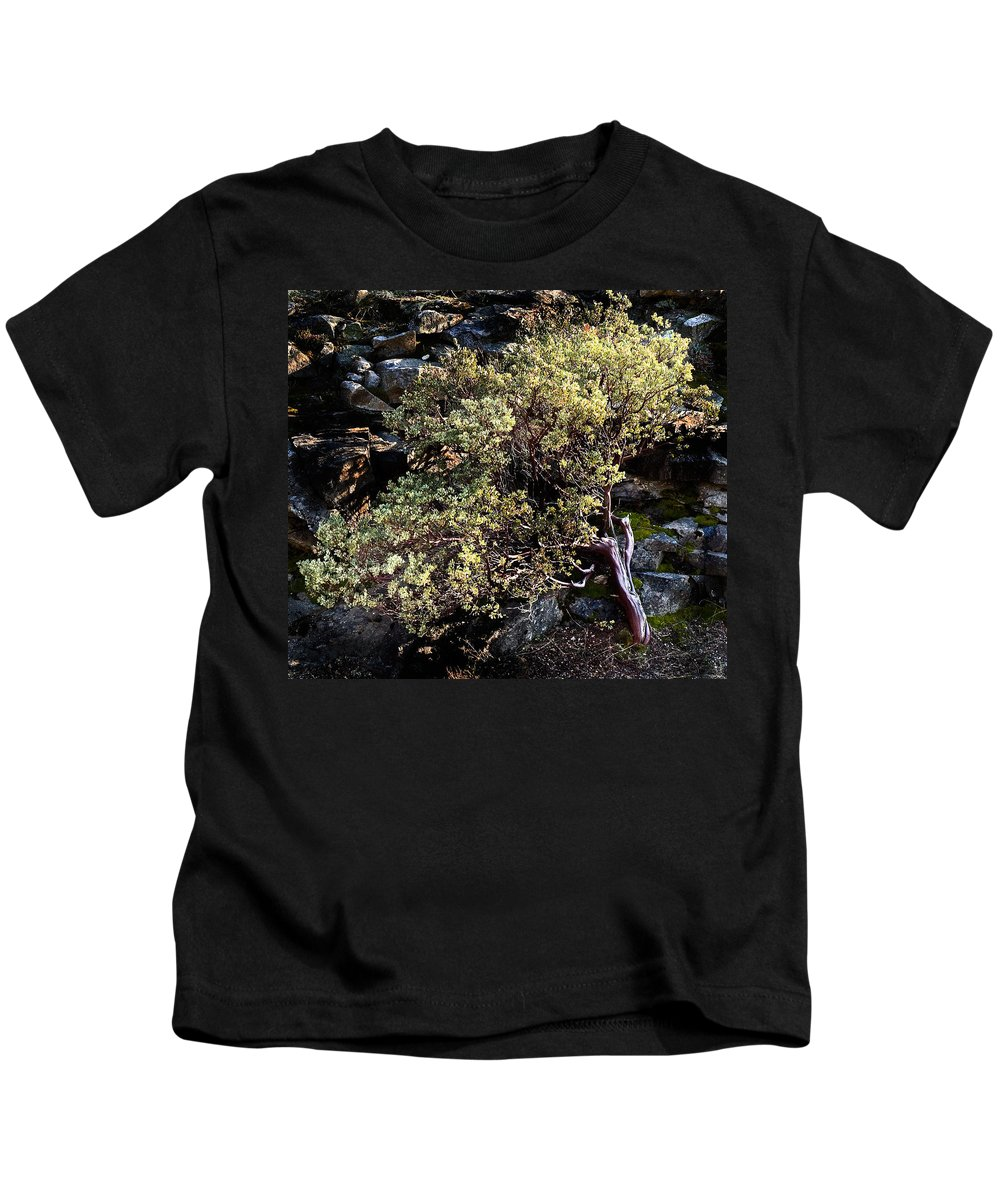 Trees Kids T-Shirt featuring the photograph Sunny Tree by Norman Andrus