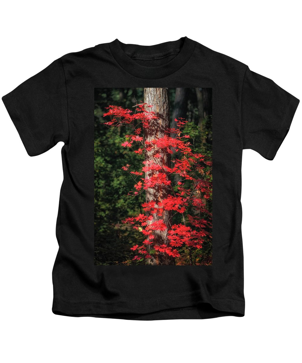 Arizona Kids T-Shirt featuring the photograph The First Maple Of Autumn by Michael Newberry