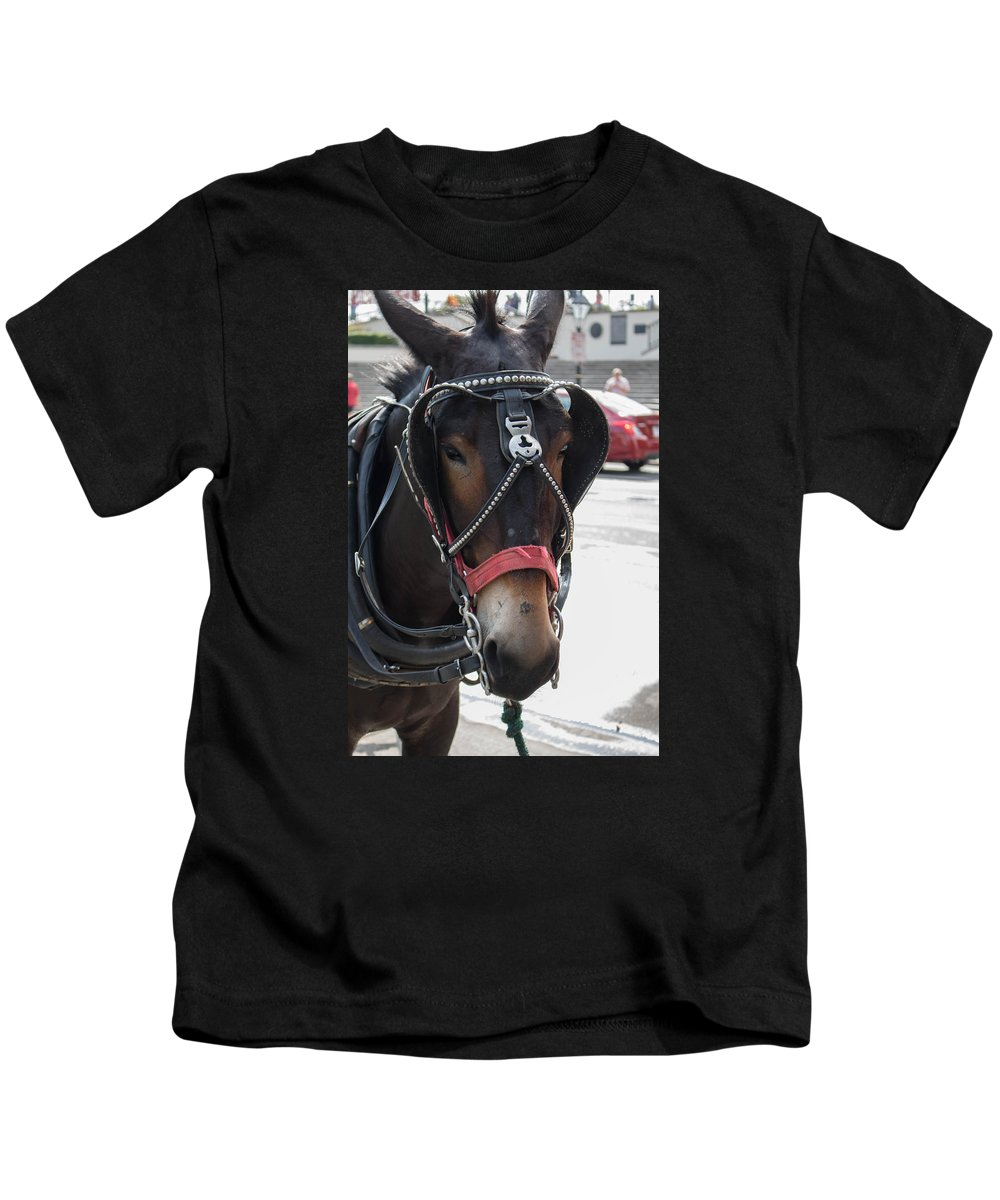 New Orleans Kids T-Shirt featuring the photograph The Mule That Poses by My NOLA Eye