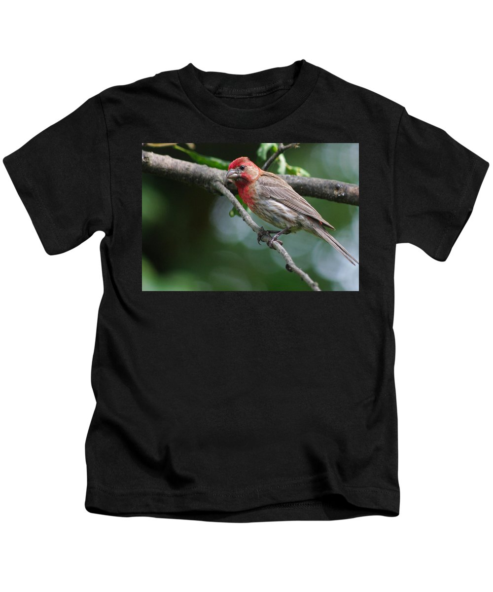 Kids T-Shirt featuring the photograph The Pose by Jenny Gandert