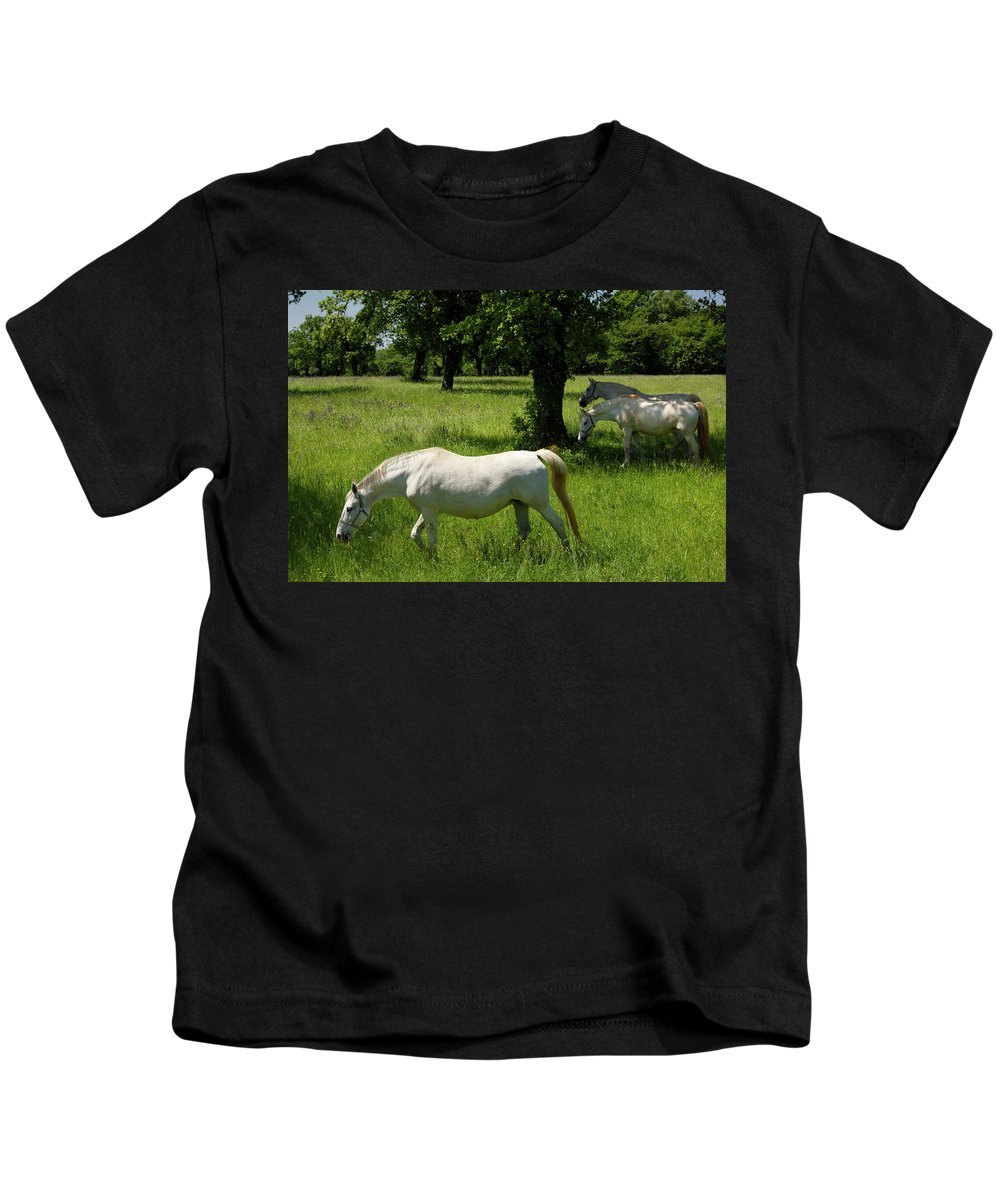 Three Kids T-Shirt featuring the photograph Three White Lipizzan Horses Grazing In A Field At The Lipica Stu by Reimar Gaertner