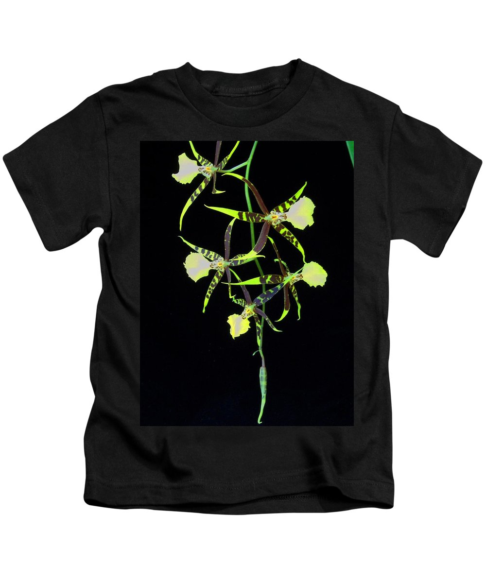 Orchid Kids T-Shirt featuring the photograph Tigers by Laurie Paci