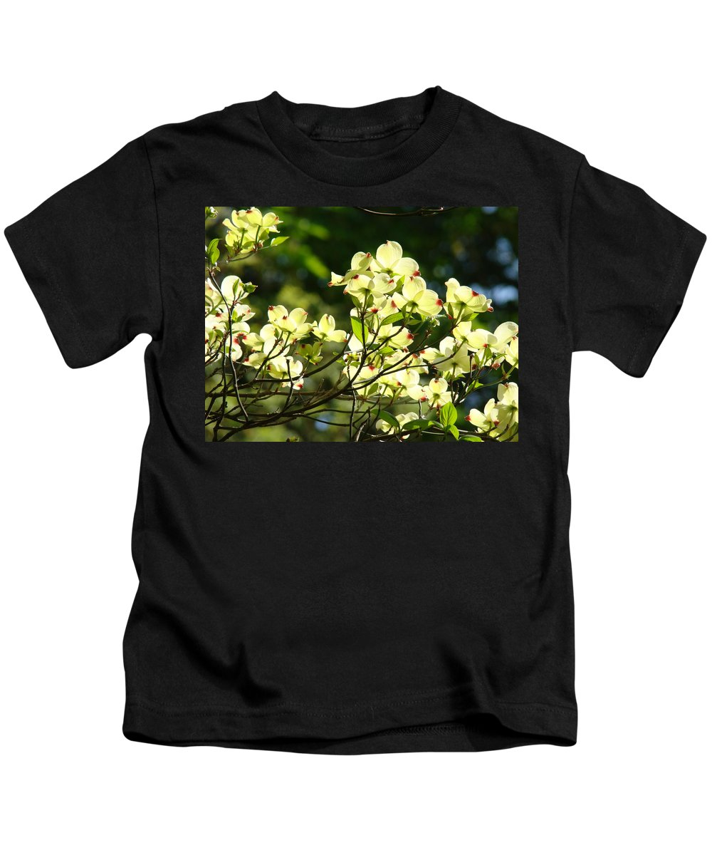 Dogwood Kids T-Shirt featuring the photograph Trees Landscape Art Sunlit White Dogwood Flowers Baslee Troutman by Baslee Troutman