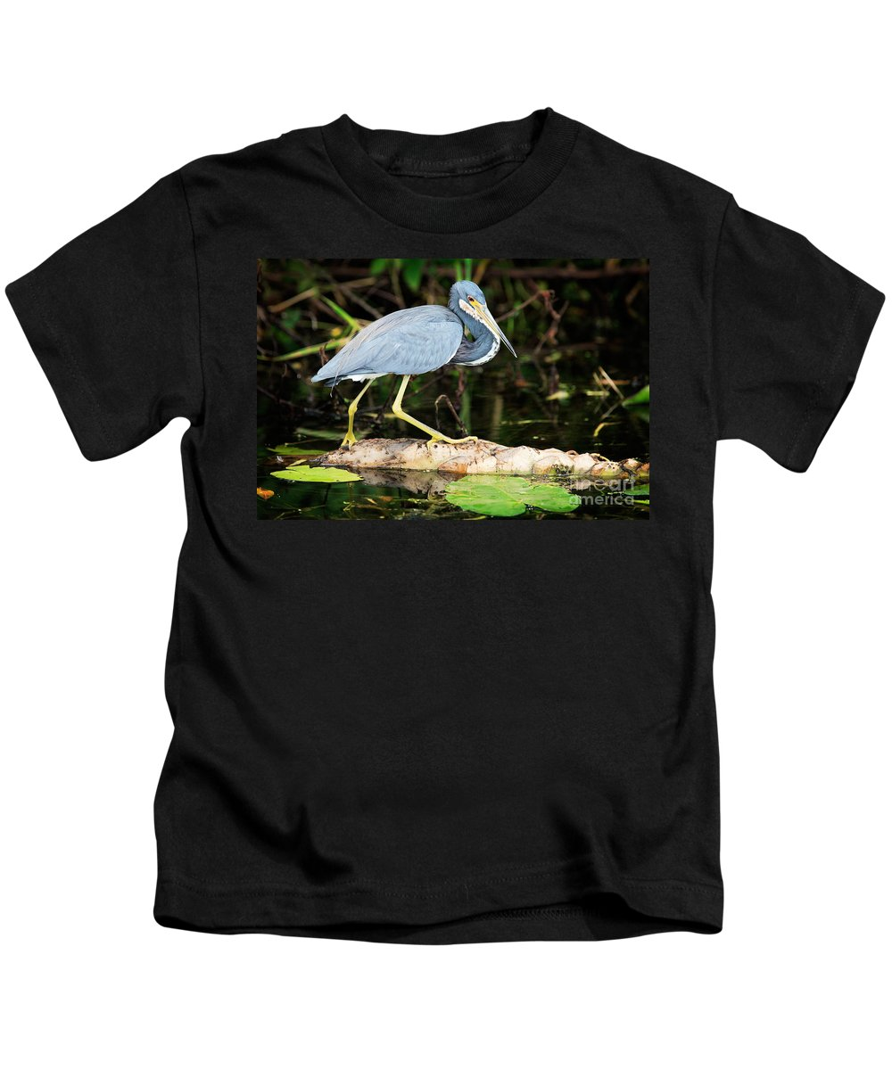 Adult Tricolored Heron Kids T-Shirt featuring the photograph Tricolored Heron by Matt Suess