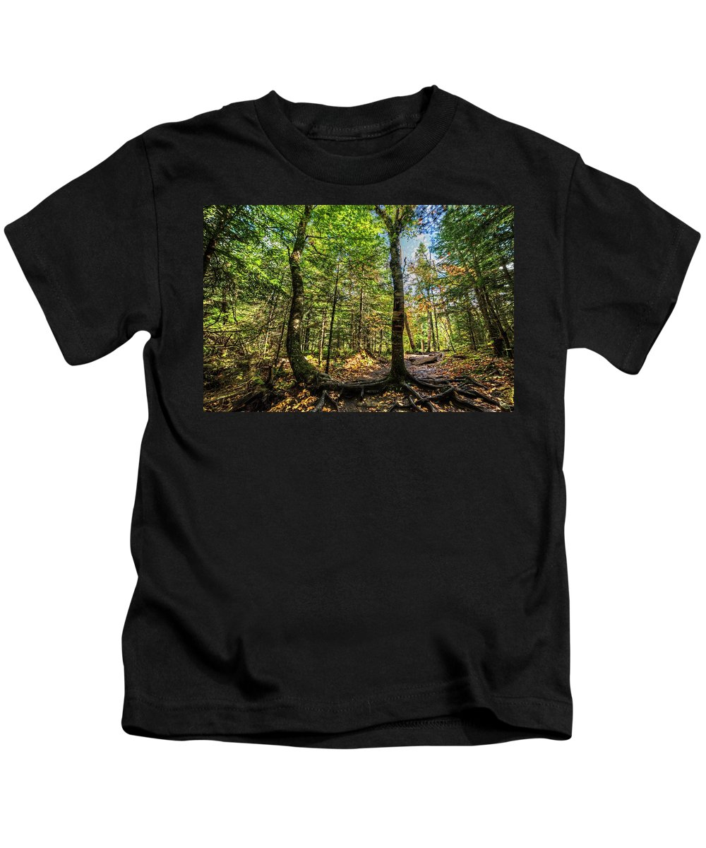 Cascade Kids T-Shirt featuring the photograph U Shaped Trees Cascade Mountain Ny New York by Toby McGuire