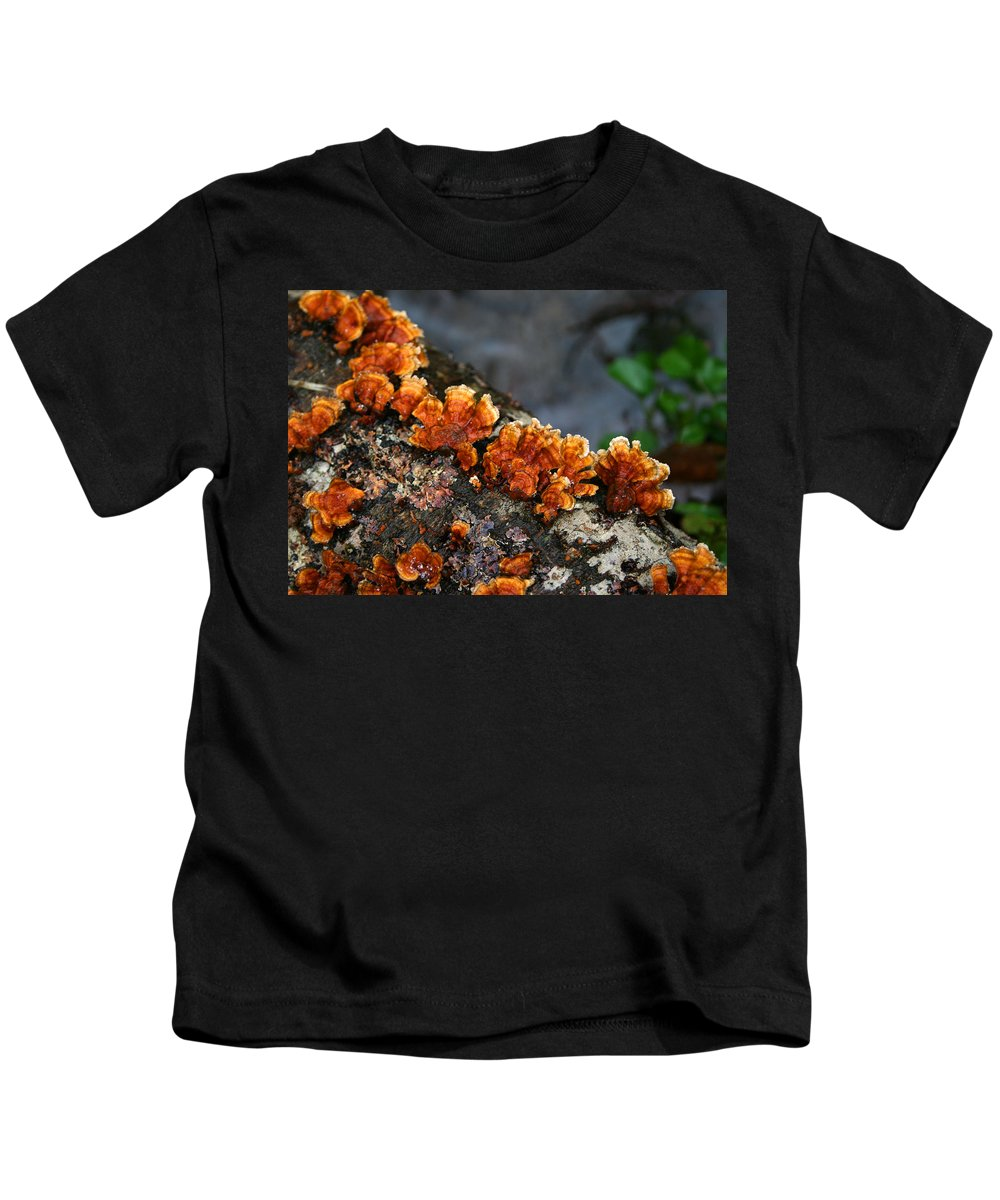 Bright Orange Nature Wet Forest Fungus Tree Wood Closeup Macro Kids T-Shirt featuring the photograph Unexpected Brightness by Andrei Shliakhau