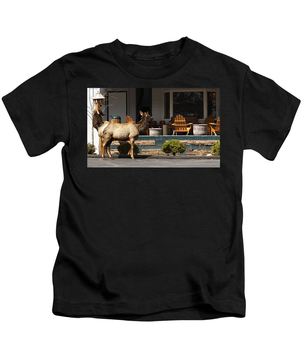 Elk Kids T-Shirt featuring the photograph Urban Elk by Marilyn Hunt