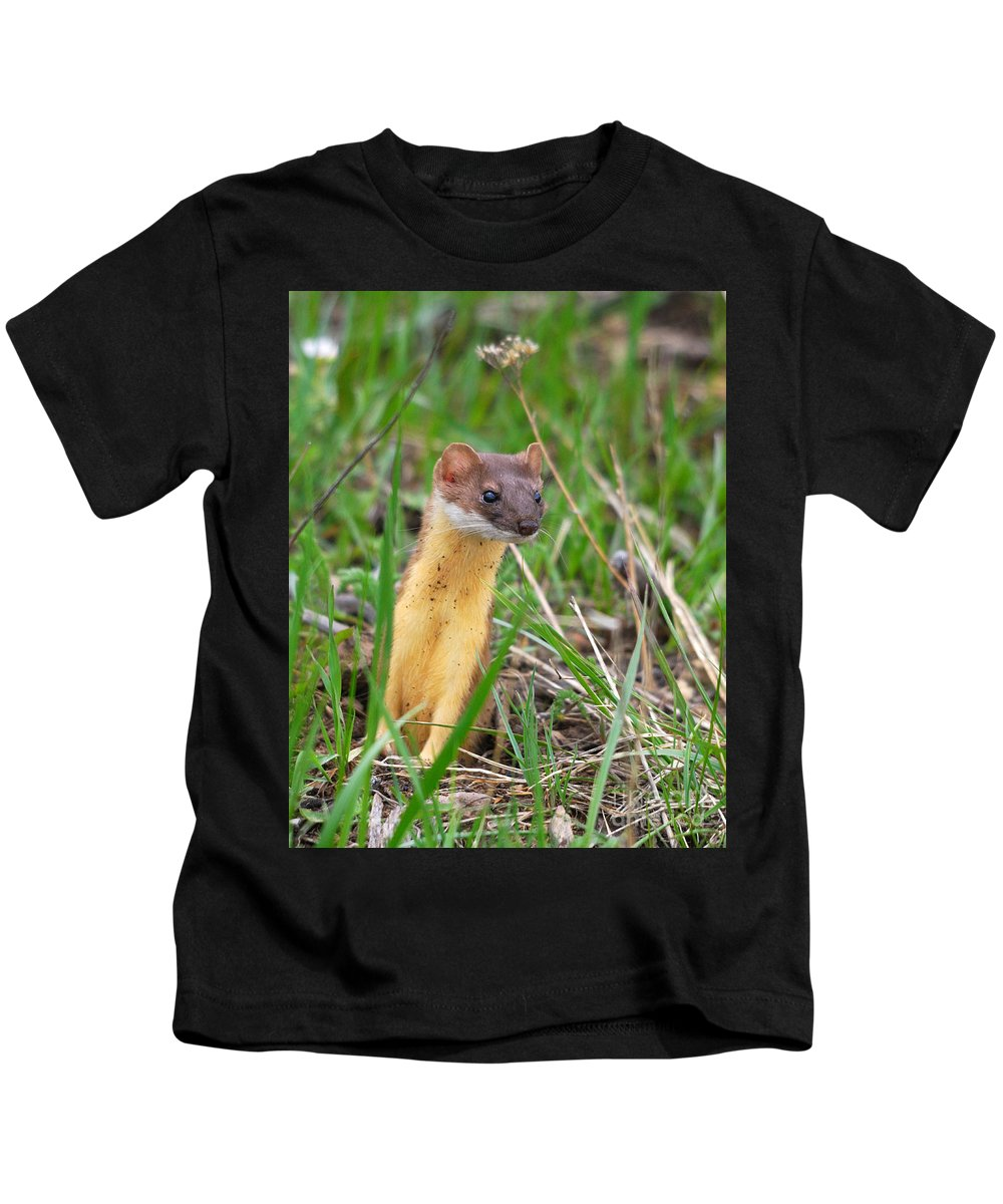 Longtailed Kids T-Shirt featuring the photograph Weasel by Brad Christensen