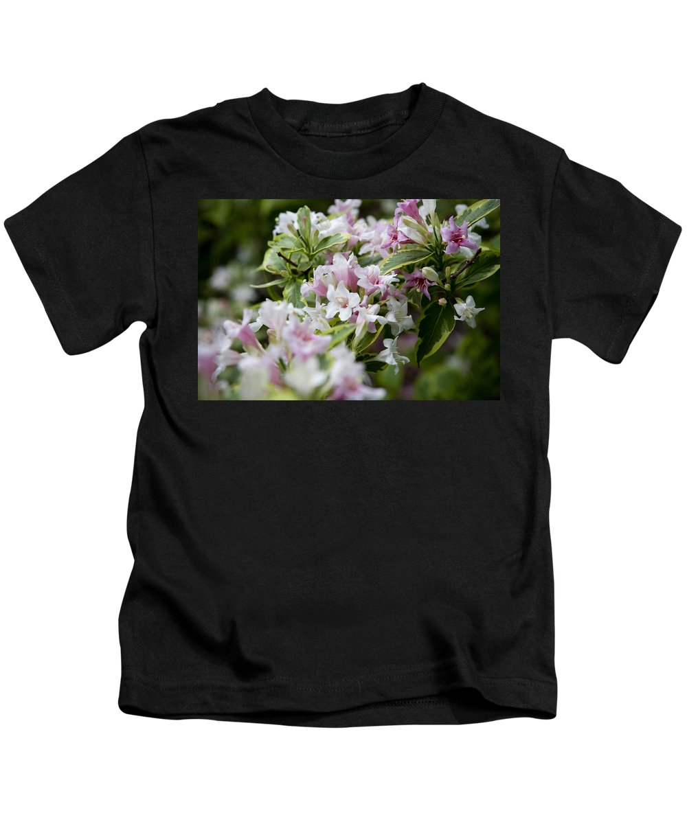 Variegated Kids T-Shirt featuring the photograph Weigela by Sandy Swanson