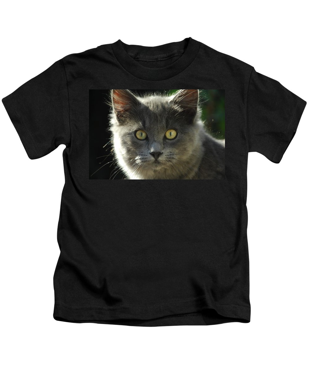 Cat Kids T-Shirt featuring the photograph Who Me by Donna Blackhall