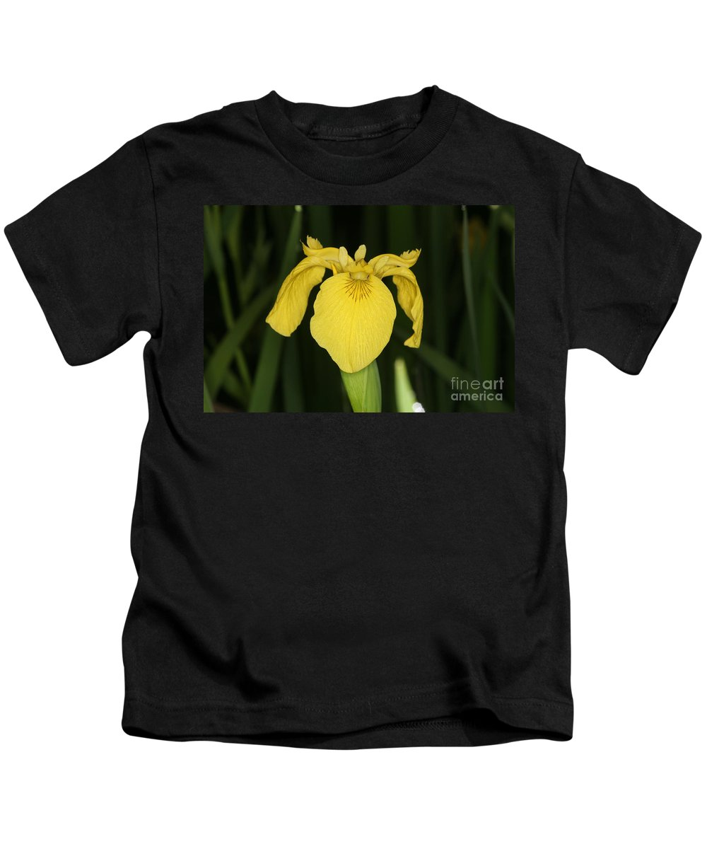 Plant Kids T-Shirt featuring the photograph Yellow Iris by Ted Kinsman