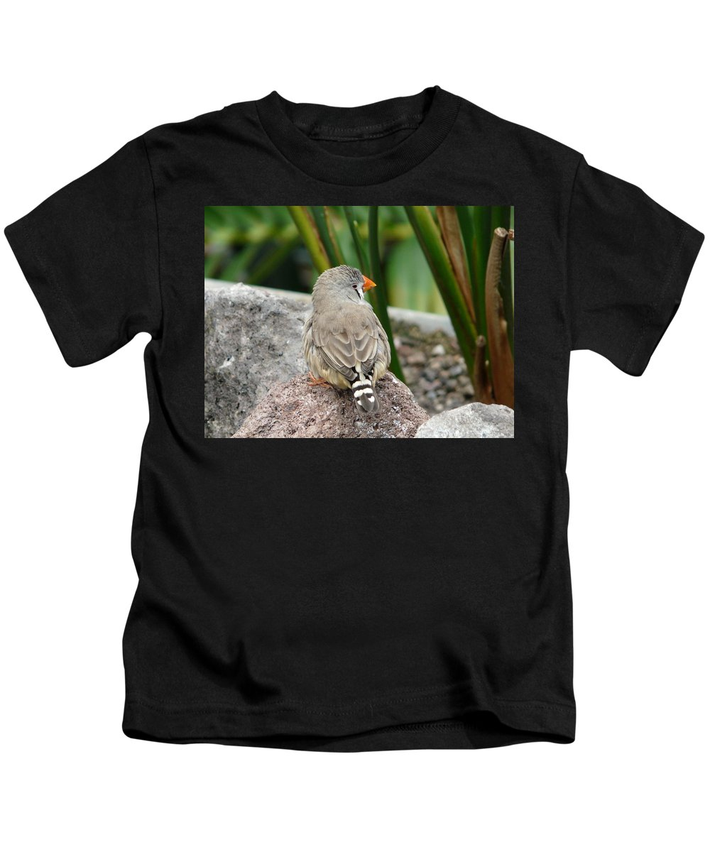 Bird Kids T-Shirt featuring the photograph Zebra Finch by Valerie Ornstein