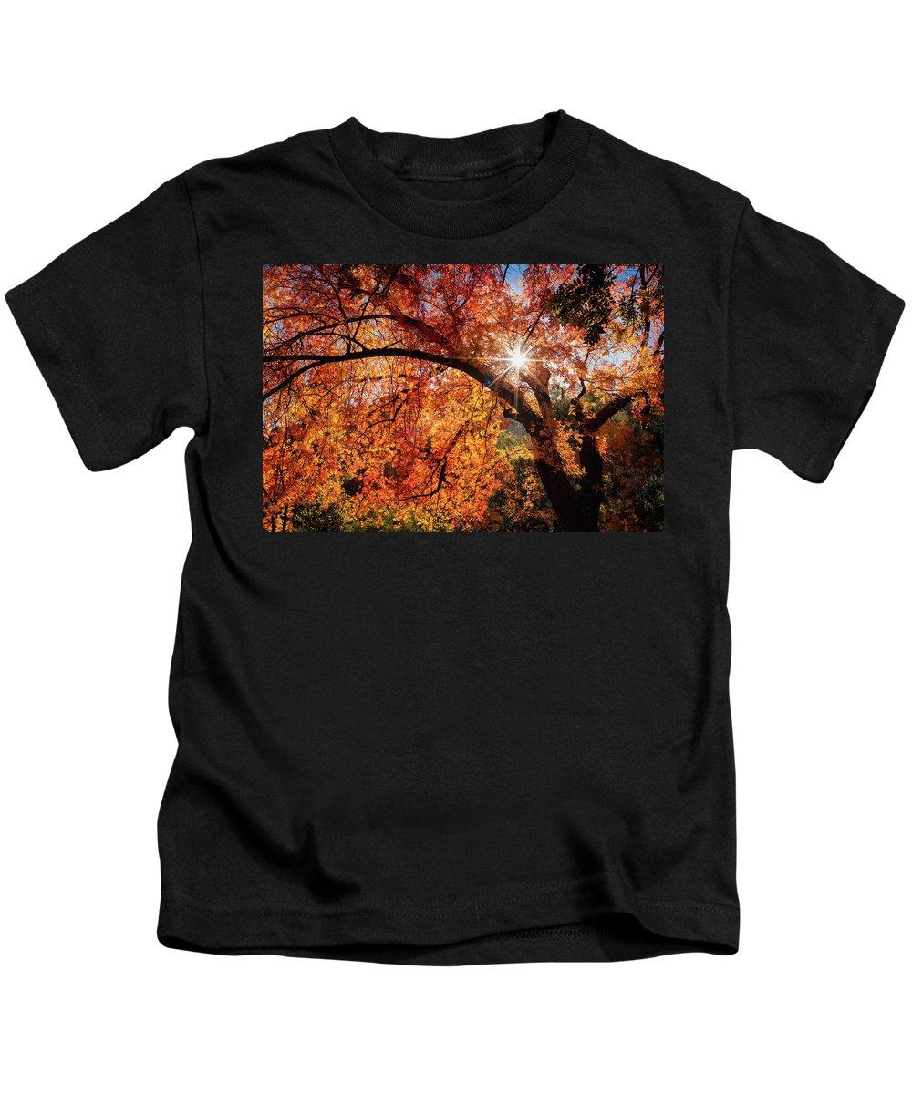 Autumn Tree Kids T-Shirt featuring the photograph Sun Peaking Through The Autumn Colors by Saija Lehtonen