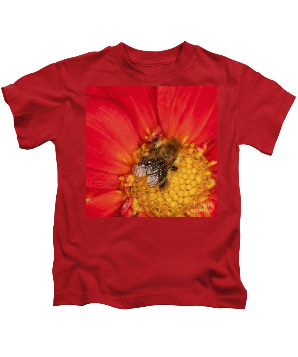 Bee Kids T-Shirt featuring the photograph Bee On Dahlia - 2 by Diane Macdonald