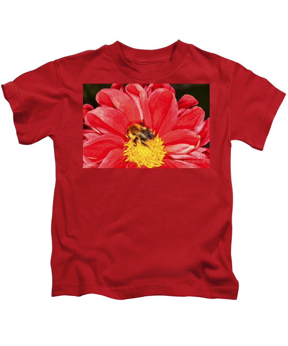 Bee Kids T-Shirt featuring the photograph Bee On Red Dahlia by Diane Macdonald