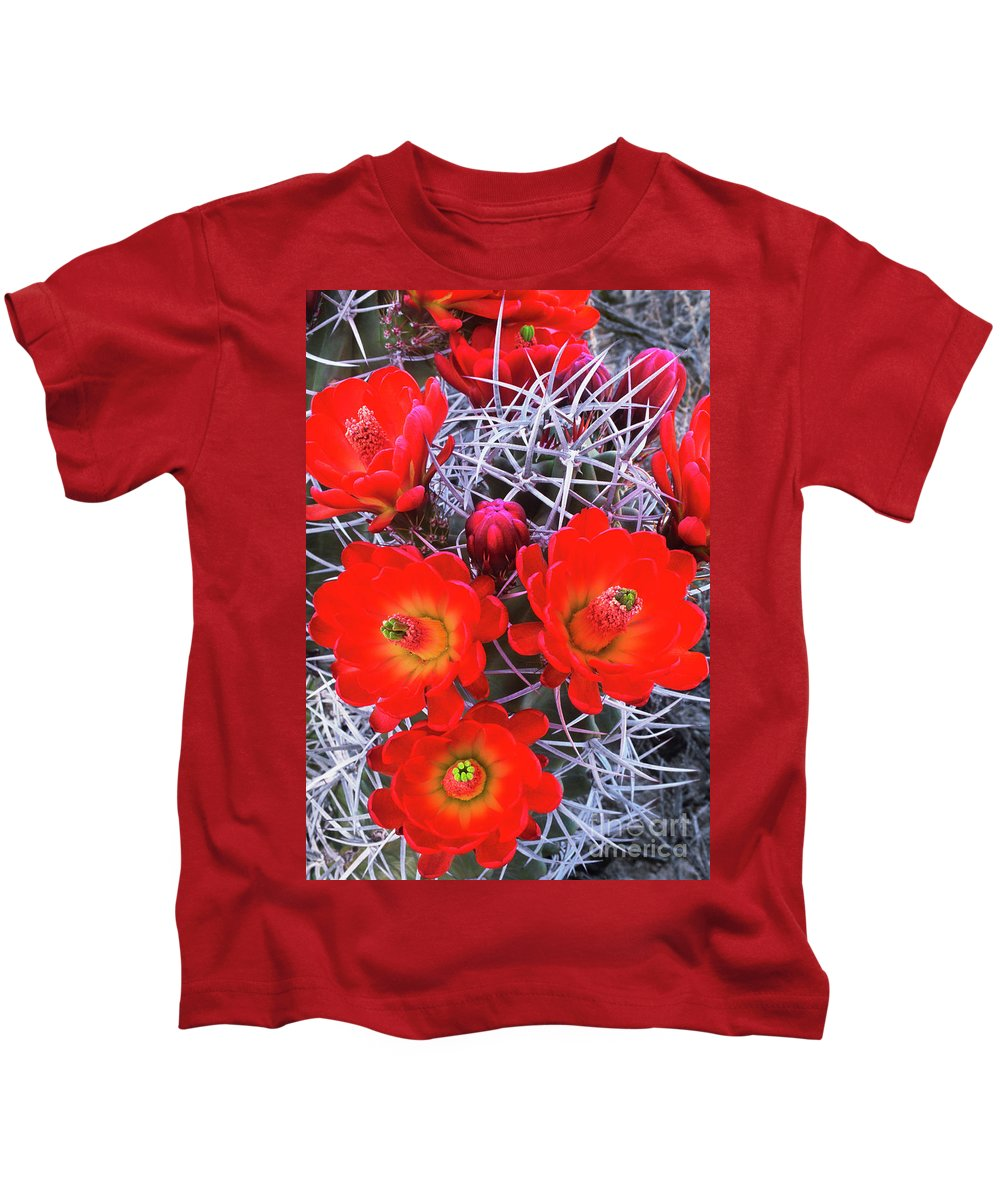 Claretcup Cactus Kids T-Shirt featuring the photograph Claretcup Cactus Blooms by Dave Welling