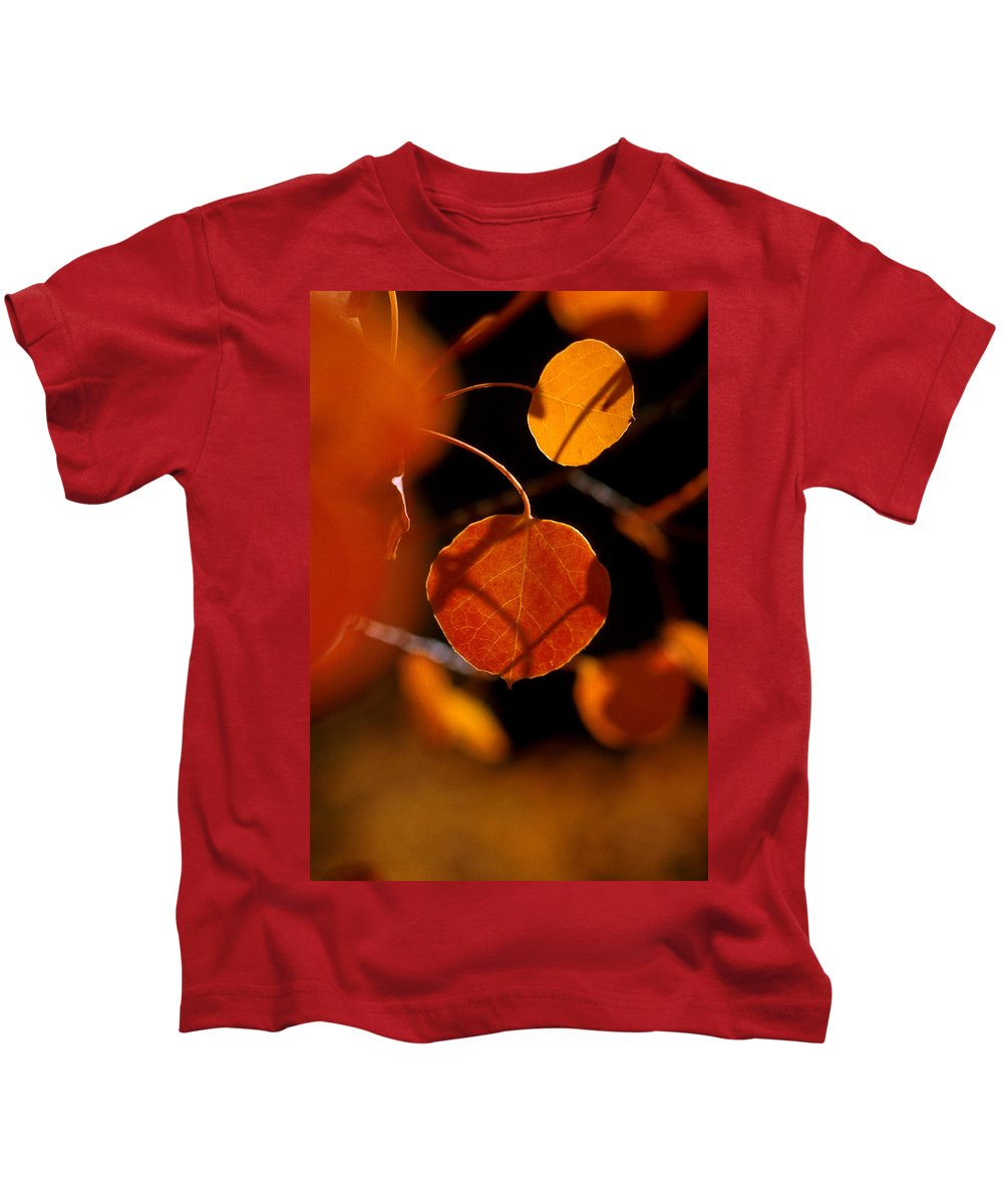 Fall Colors Kids T-Shirt featuring the photograph Colorado Gold by Jerry McElroy