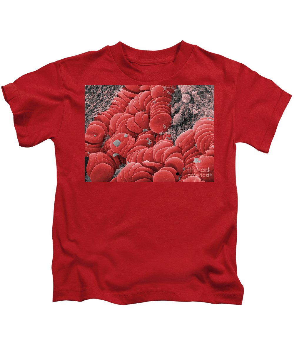 Science Kids T-Shirt featuring the photograph Human Red Blood Cells, Sem by Ted Kinsman