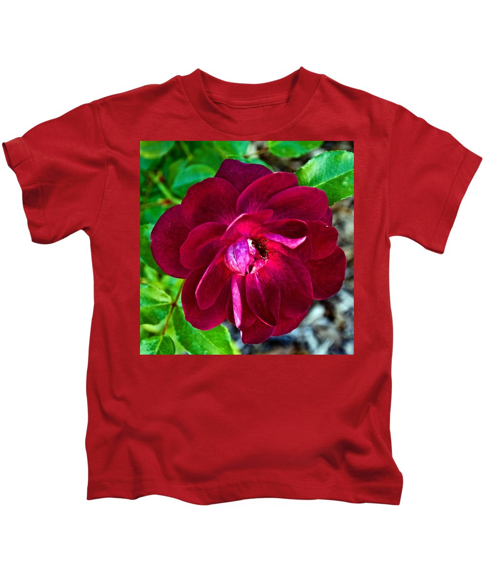 Burgundy Red Rose At Pilgrim Place In Claremont Kids T-Shirt featuring the photograph Burgundy Red Rose At Pilgrim Place In Claremont-california by Ruth Hager