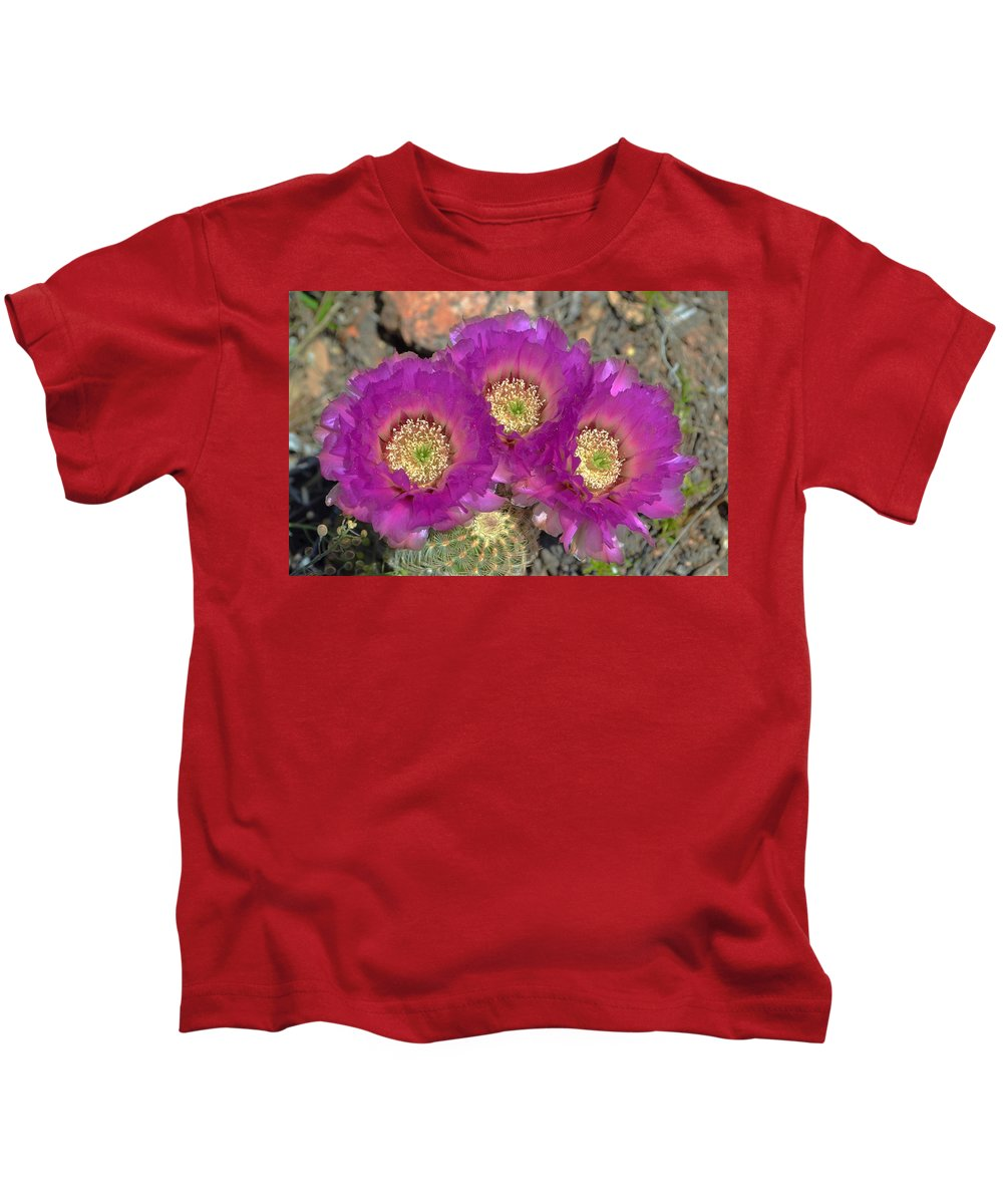 Hedgehog Cactus Kids T-Shirt featuring the photograph Hedgehog Cactus Triplets by Dennis Nelson