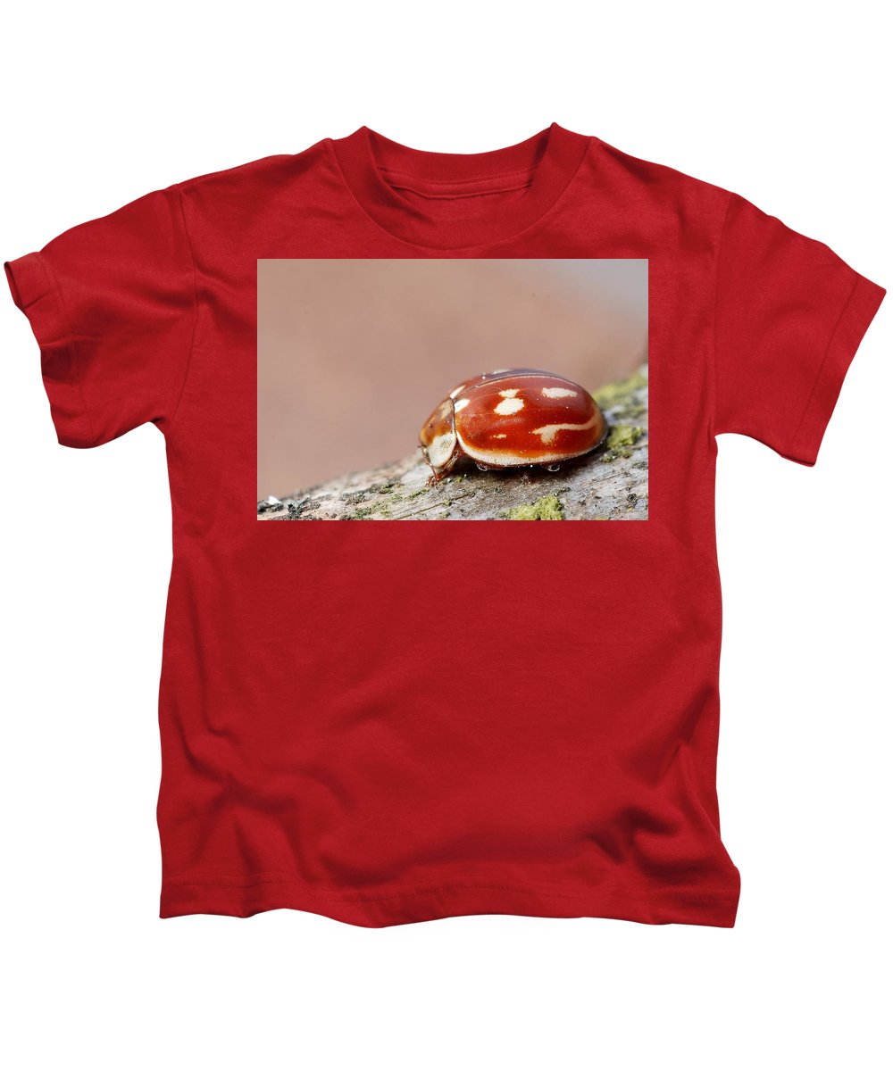 Insect Kids T-Shirt featuring the digital art Insect by Dorothy Binder