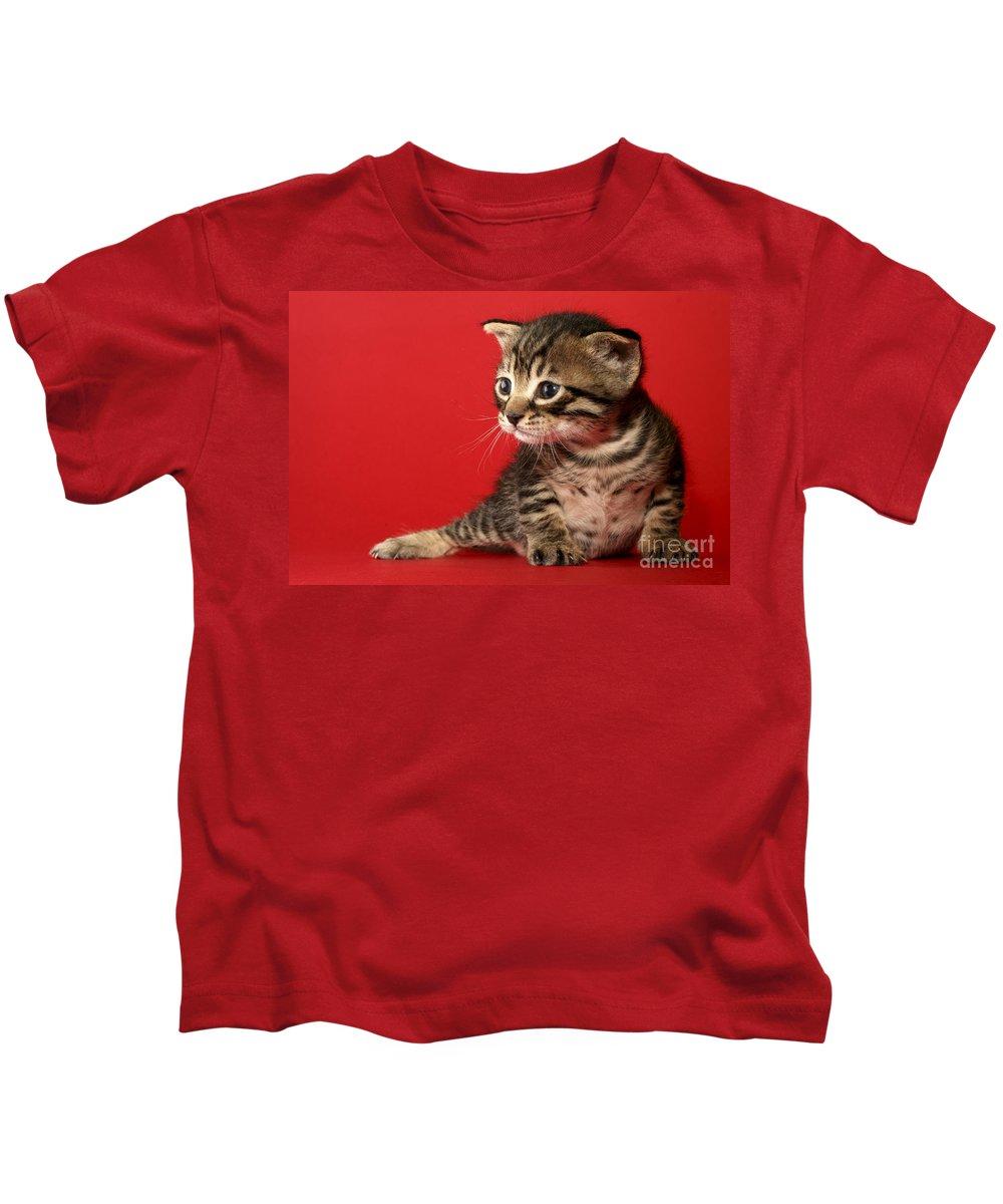 Cat Kids T-Shirt featuring the photograph Kitten On Red by Yedidya yos mizrachi