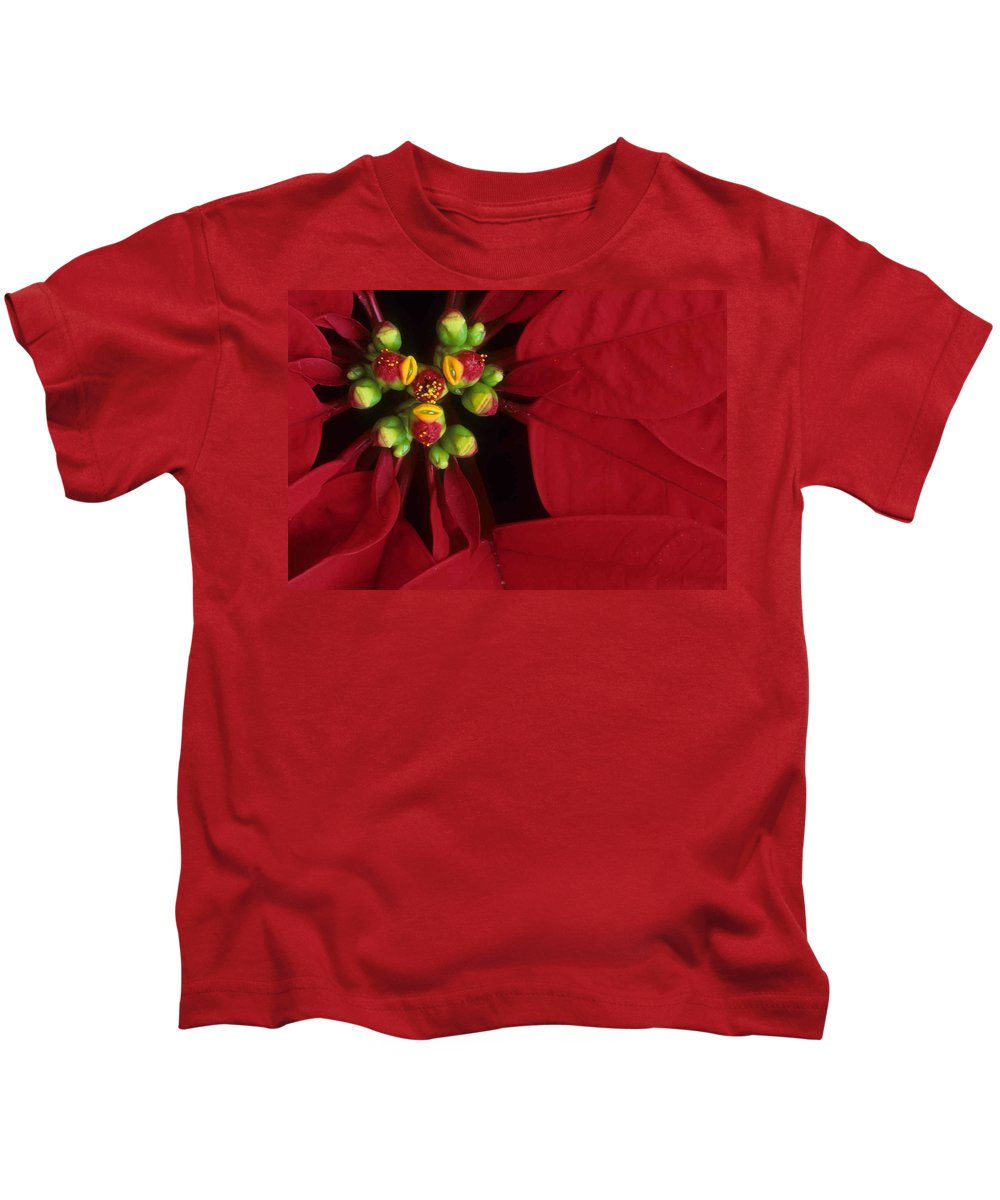 Poinsettia Kids T-Shirt featuring the photograph Poinsettia by Laurie Paci