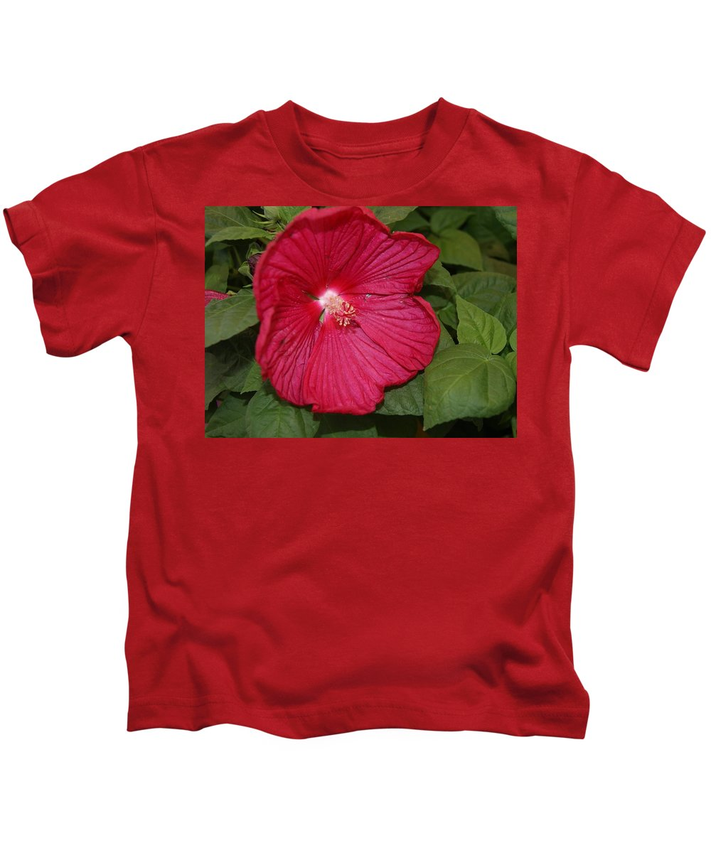 The Big Red Hardy Hibiscus Kids T Shirt For Sale By Paul Phyllis