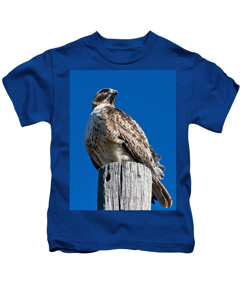 Hawk Kids T-Shirt featuring the photograph Red Tailed Hawk by Ronnie Prcin
