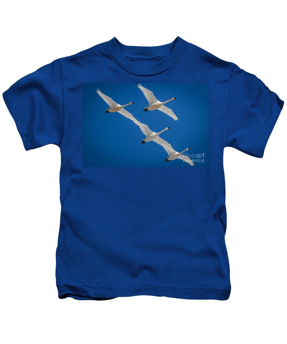 Tundra Swans Kids T-Shirt featuring the photograph Tundra Swans by Matt Hoffmann