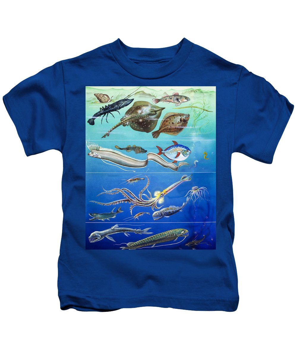 Sea Kids T-Shirt featuring the painting Underwater Creatures Montage by English School