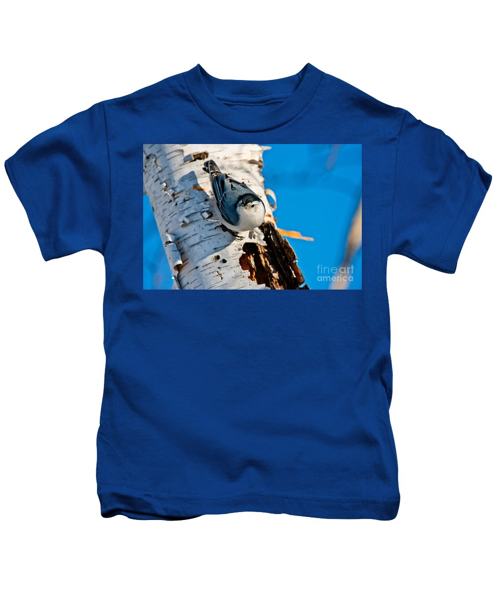 White-breasted Nuthatch Kids T-Shirt featuring the photograph White-breasted Nuthatch Pictures 95 by World Wildlife Photography