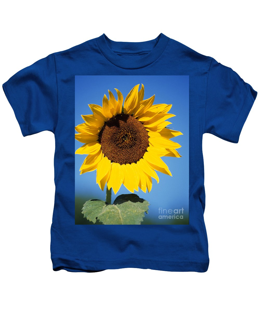 Sun Flower Kids T-Shirt featuring the photograph Full Sunflower by Sharon Elliott