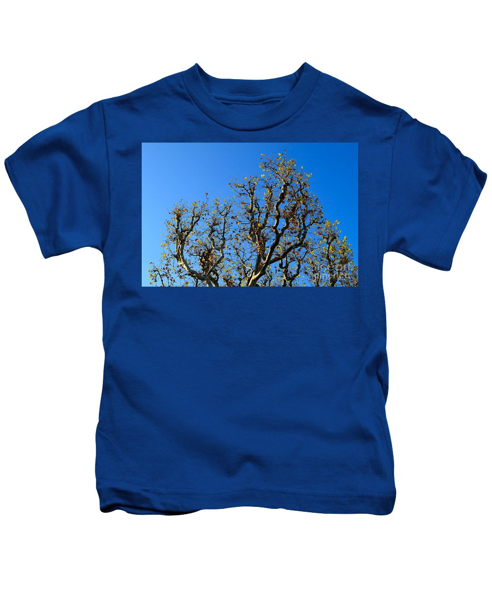 Plane Tree Kids T-Shirt featuring the photograph Plane Tree In Autumn by Louise Heusinkveld