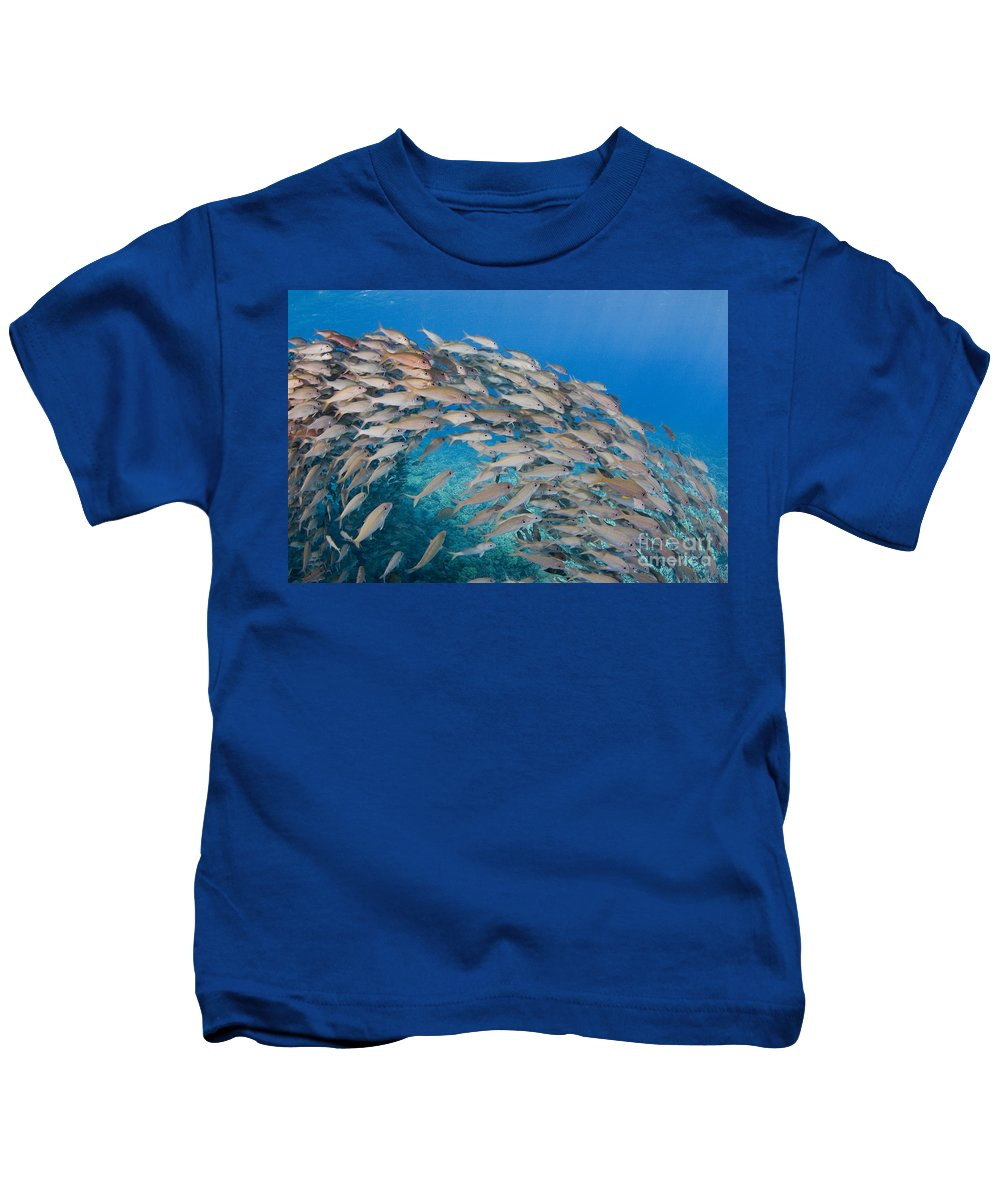 Animal Art Kids T-Shirt featuring the photograph Yellowfin Goatfish by Dave Fleetham - Printscapes