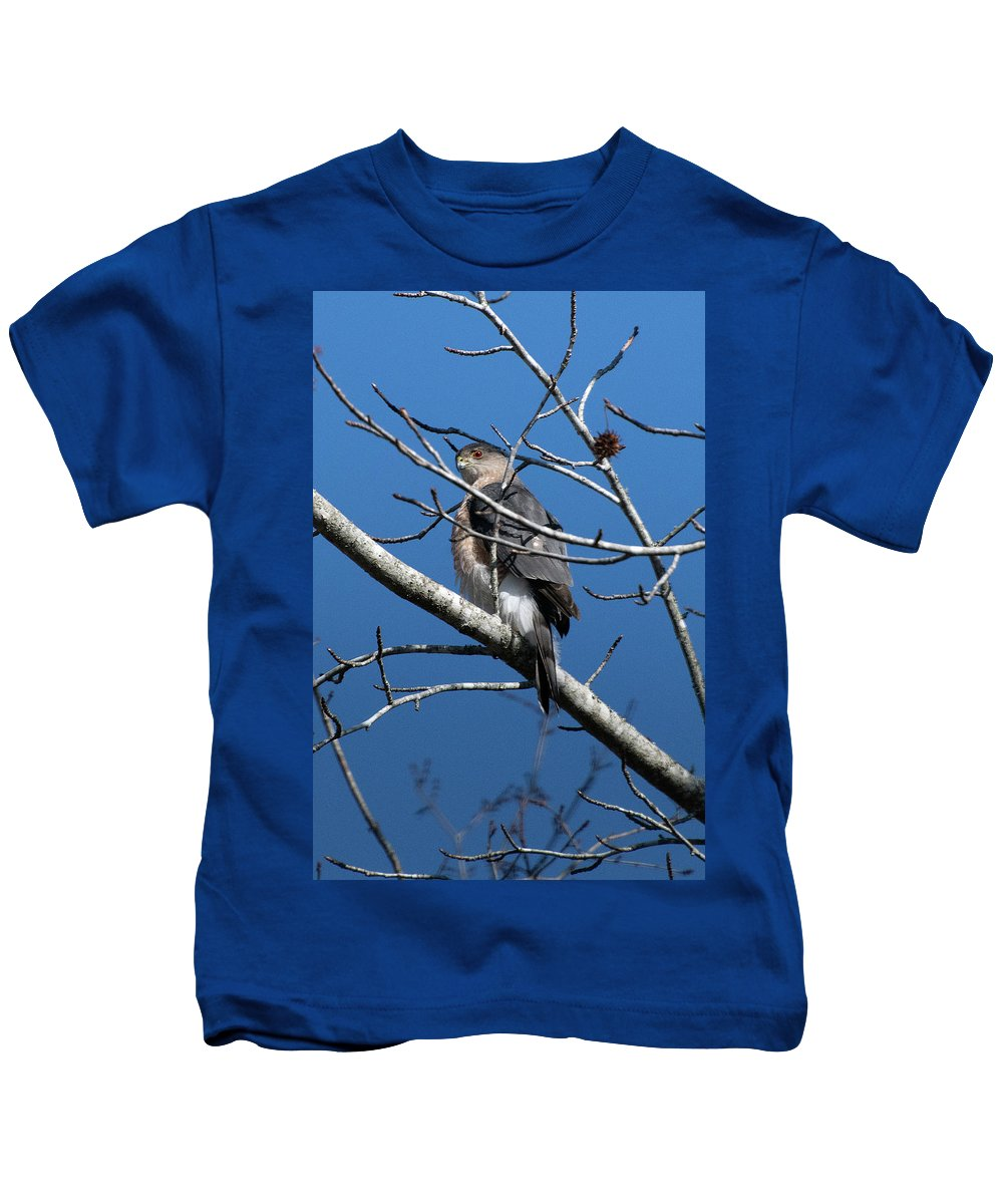 Hawk Kids T-Shirt featuring the photograph Cooper's Hawk by TJ Baccari