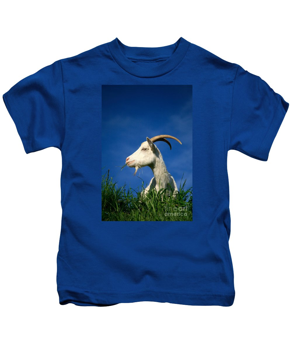 Animals Kids T-Shirt featuring the photograph Goat by Gaspar Avila