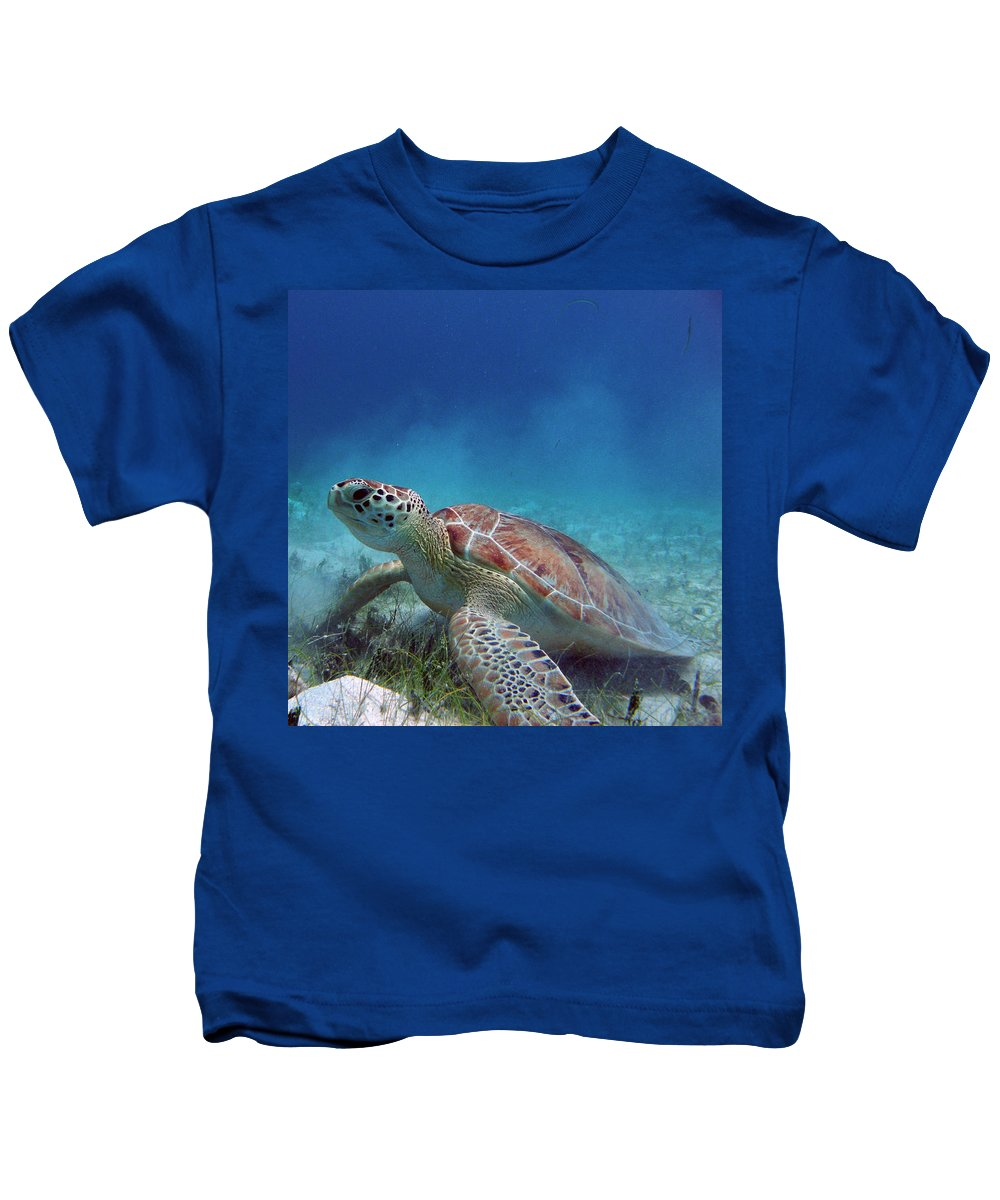 Salt Pond Kids T-Shirt featuring the photograph Green Turtle by Kimberly Mohlenhoff