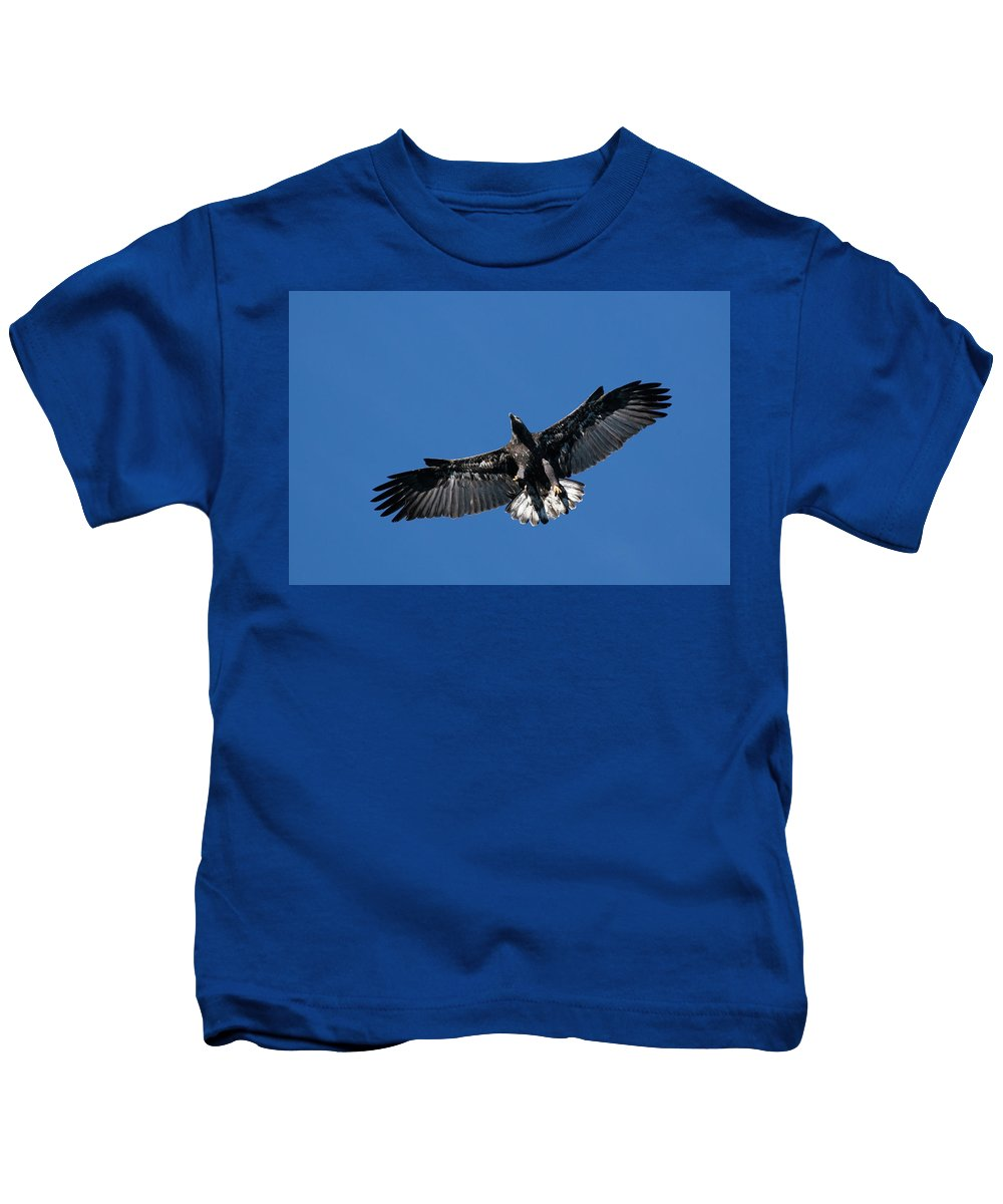 Bald Eagle Kids T-Shirt featuring the photograph Juvenile Bald Eagle by Randall Ingalls