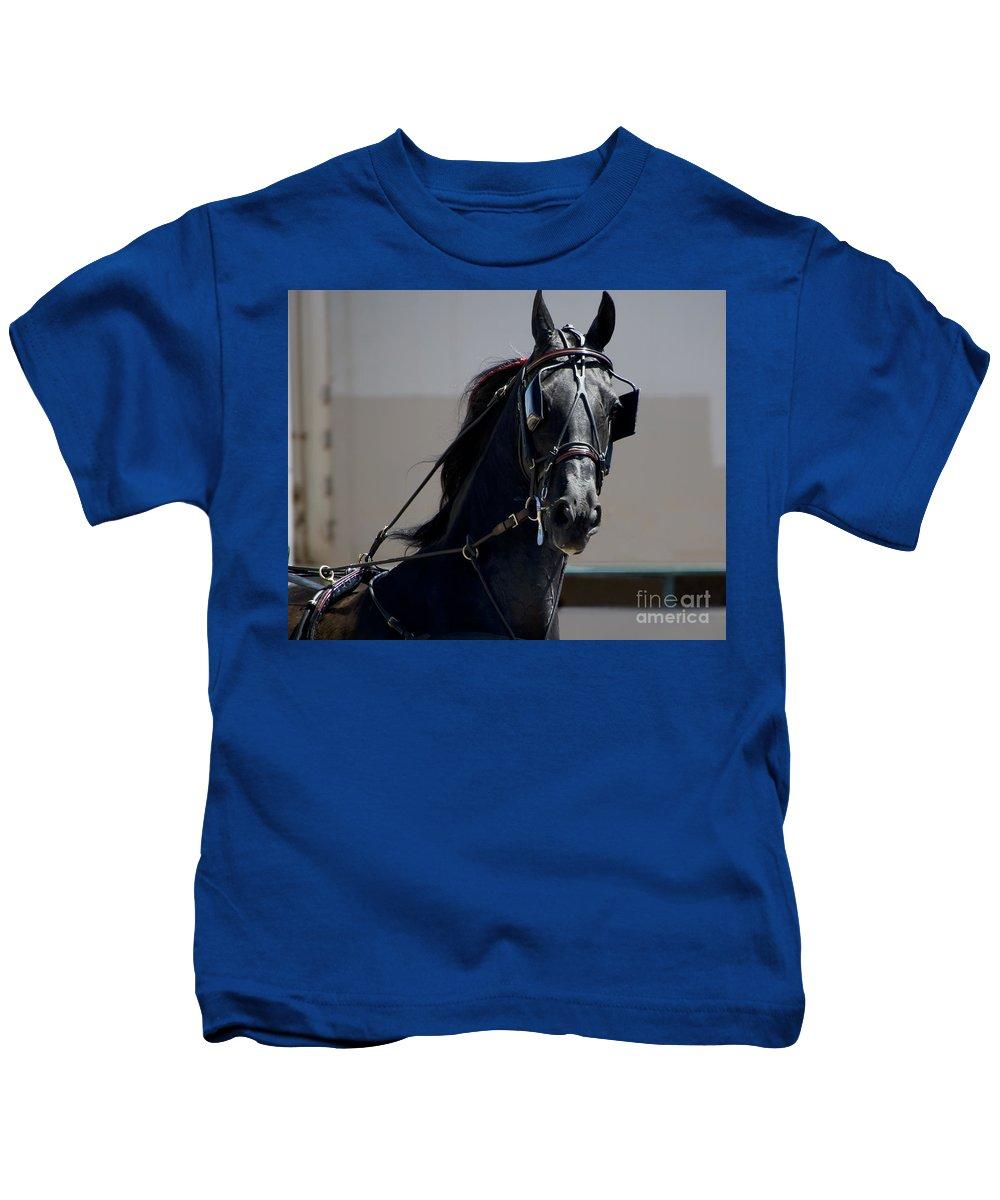 Horses Kids T-Shirt featuring the photograph Morgan Horse by Waterdancer