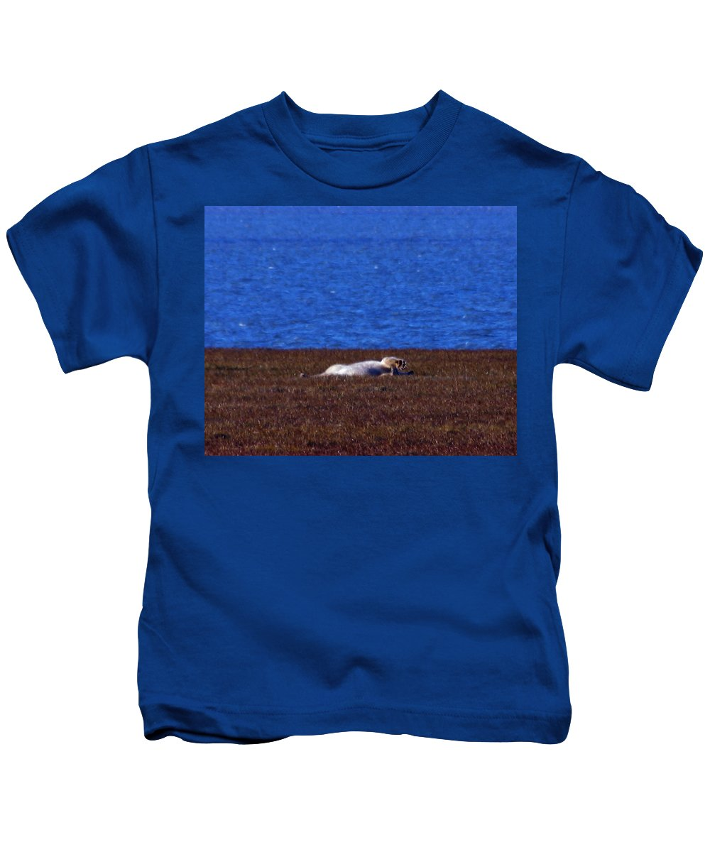 Polar Bear Kids T-Shirt featuring the photograph Polar Bear Rolling In Tundra Grass by Anthony Jones