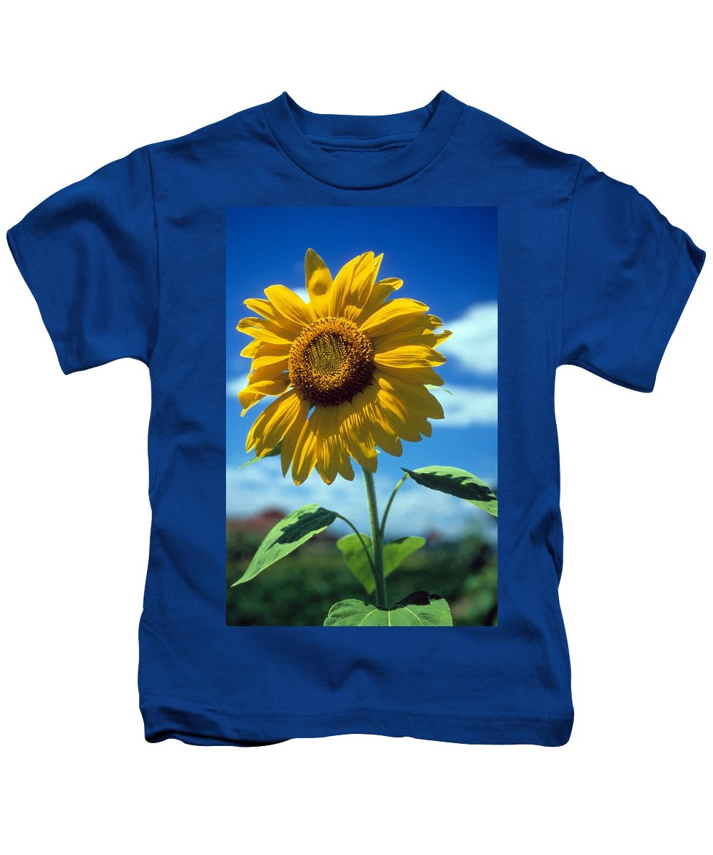 Sussex County Kids T-Shirt featuring the photograph Sussex County Sunflower by Laurie Paci