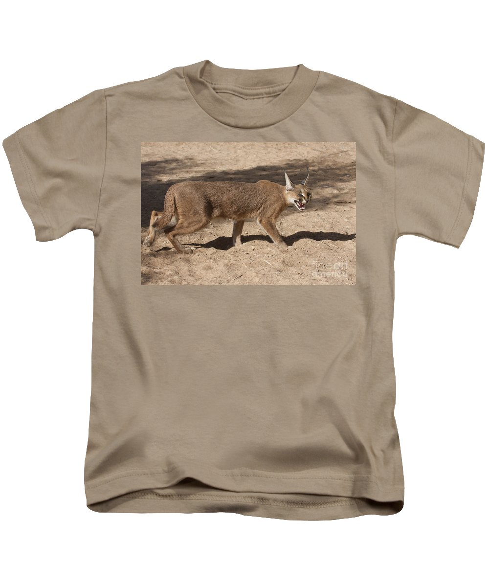 Caracal Kids T-Shirt featuring the photograph Caracal by Eyal Bartov